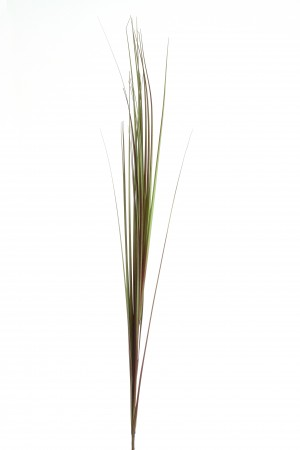 HASTE DE CAPIM  GRASS